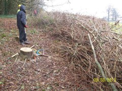 Creating a coppiced boundary to south east edge
